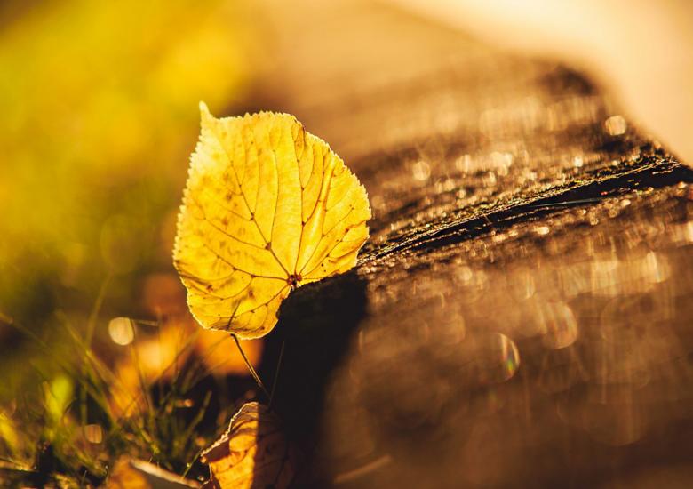 Ponto de Caboclo - Caiu uma folha na jurema